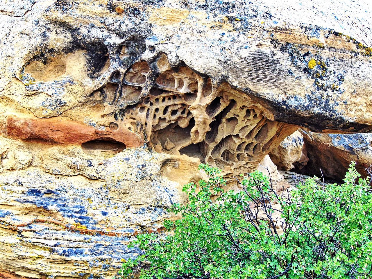 Plants Against Rock Formation