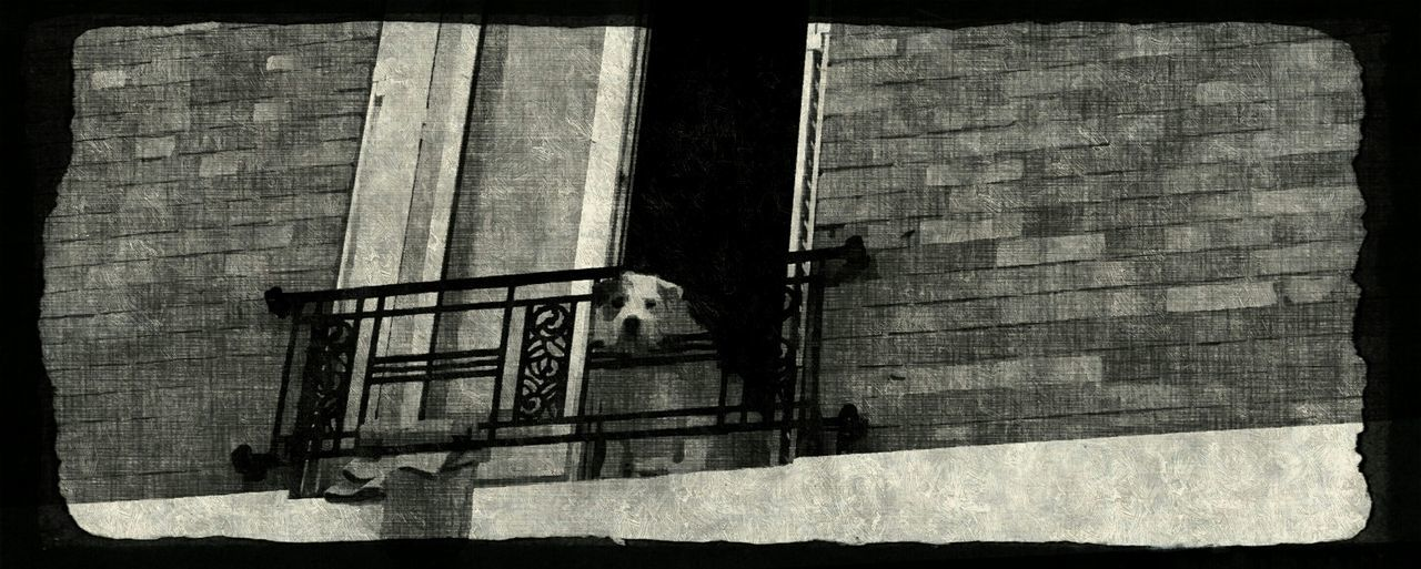 Black Blak And White dog Dog Watching Balcon City