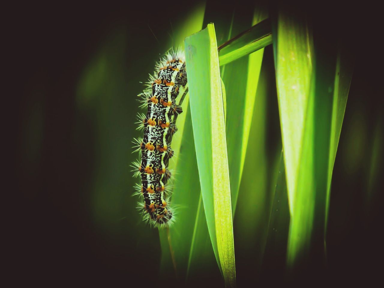 animal themes, insect, animals in the wild, one animal, green color, nature, no people, close-up, animal wildlife, day, outdoors, plant, beauty in nature