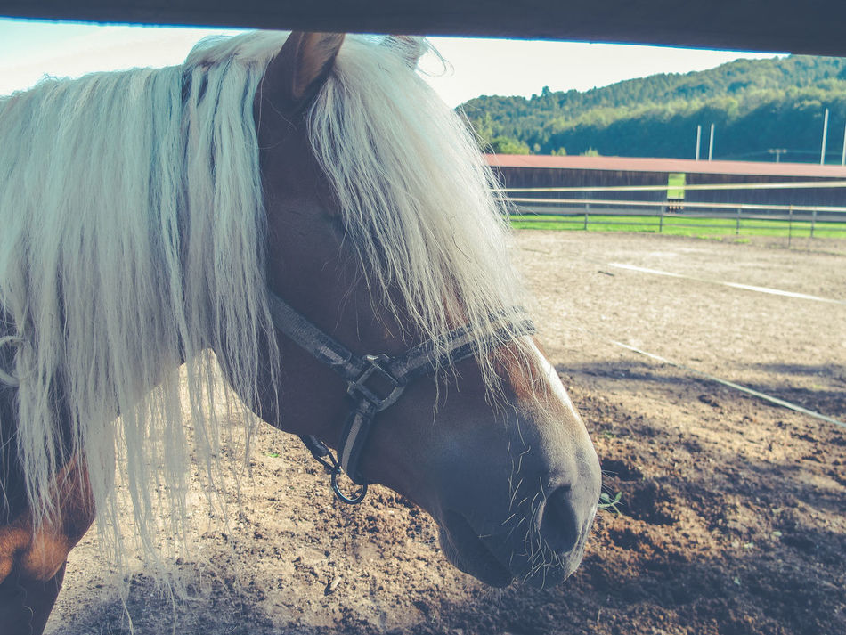 Animal Body Part Animal Themes Close-up Day Domestic Animals Equine Equinephotography Horse Horses Low Section Mammal Nature One Person Outdoors People