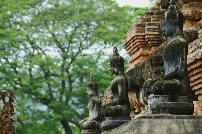 Statue Tree Sculpture Spirituality Art And Craft Religion Place Of Worship Human Representation Art Temple - Building Focus On Foreground Creativity The Past History Carving - Craft Product Travel Destinations Buddha Famous Place Tourism Old Ruin Sukhothaihistoricalpark Thailand_allshots