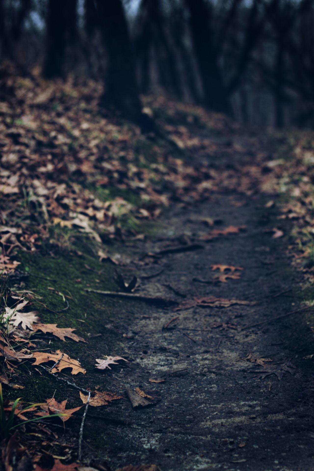 Into the woods Nature Leaf Tree Forest No People Outdoors Beauty In Nature EyeEm EyeEm Best Shots Bokeh Getting Inspired