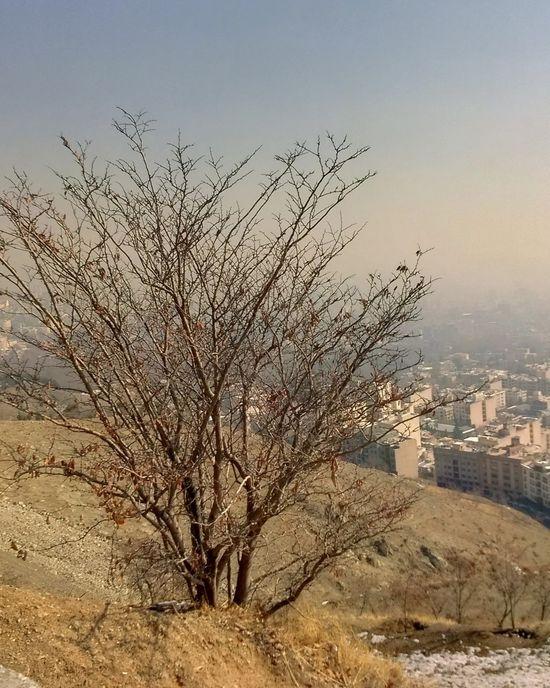 Tree Sky Sunset Sun Architecture Day Tehran, Iran Tochal Tehran Picture Beauty In Nature Tree Nature Iran Like4like No People Likesforlikes Followme Follow4follow تهران تهرانگردی