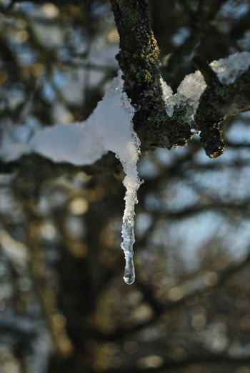 Frozen but dripping December EyeEmNewHere Frozen Hungary Nature Visegrád-Hungary Winter Wintertime Beauty In Nature Branch Close-up Cold Temperature Colorful Day First Day Of December Focus On Foreground Frost Frozen Frozen Nature Ice Ice Crystal Icicle Lichen Lovewinter Nature No People Outdoors Snow The First Snow Tranquility Tree Valentinamilkovics Water Weather White Color Winter