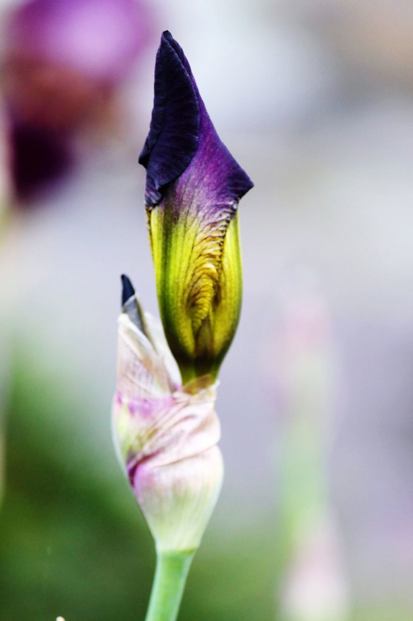 flower, fragility, purple, petal, beauty in nature, growth, nature, one animal, focus on foreground, freshness, close-up, flower head, plant, no people, outdoors, day, animal themes, insect, blooming, animals in the wild, iris - plant