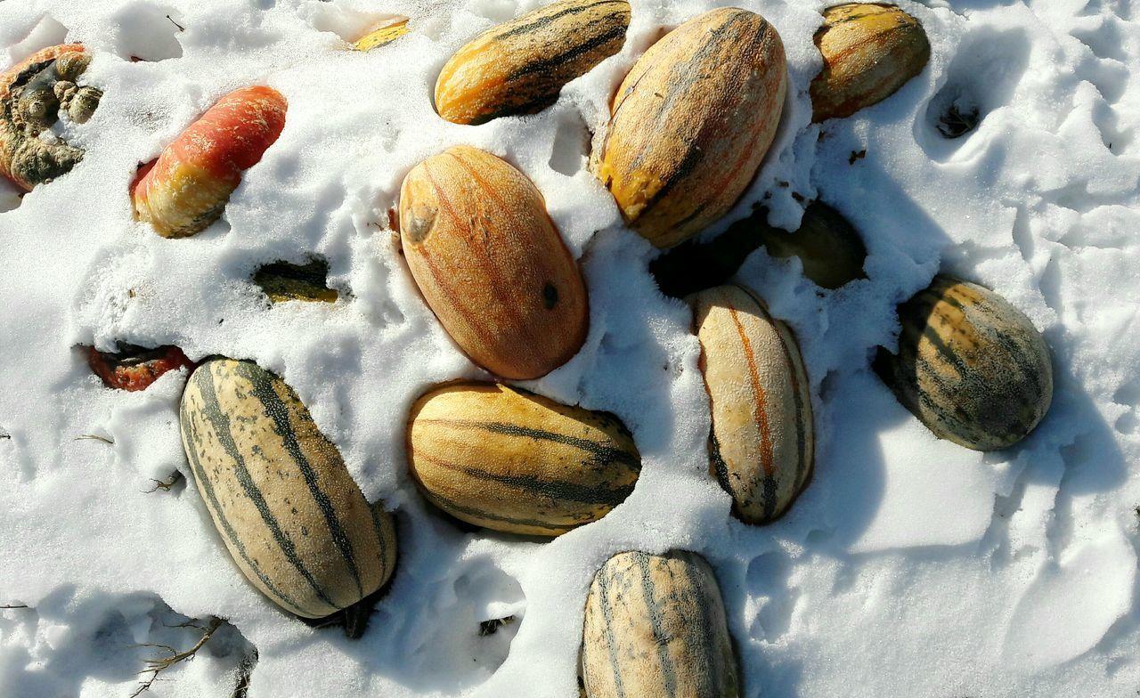 Cold Temperature Food Snow No People Waste Food Pumpkin Winter EyeEmNewHere Pattern