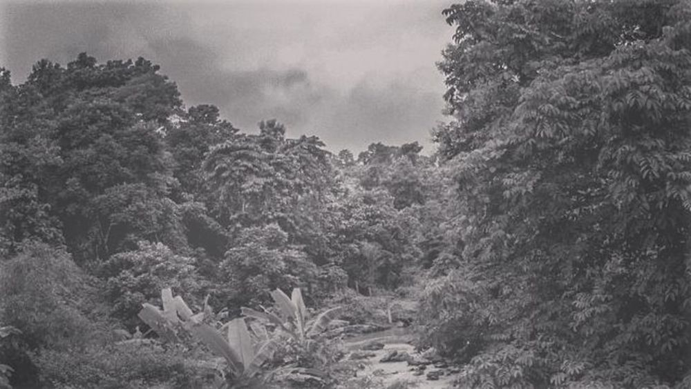 Nature Landscape BeautifulBANGLADESH