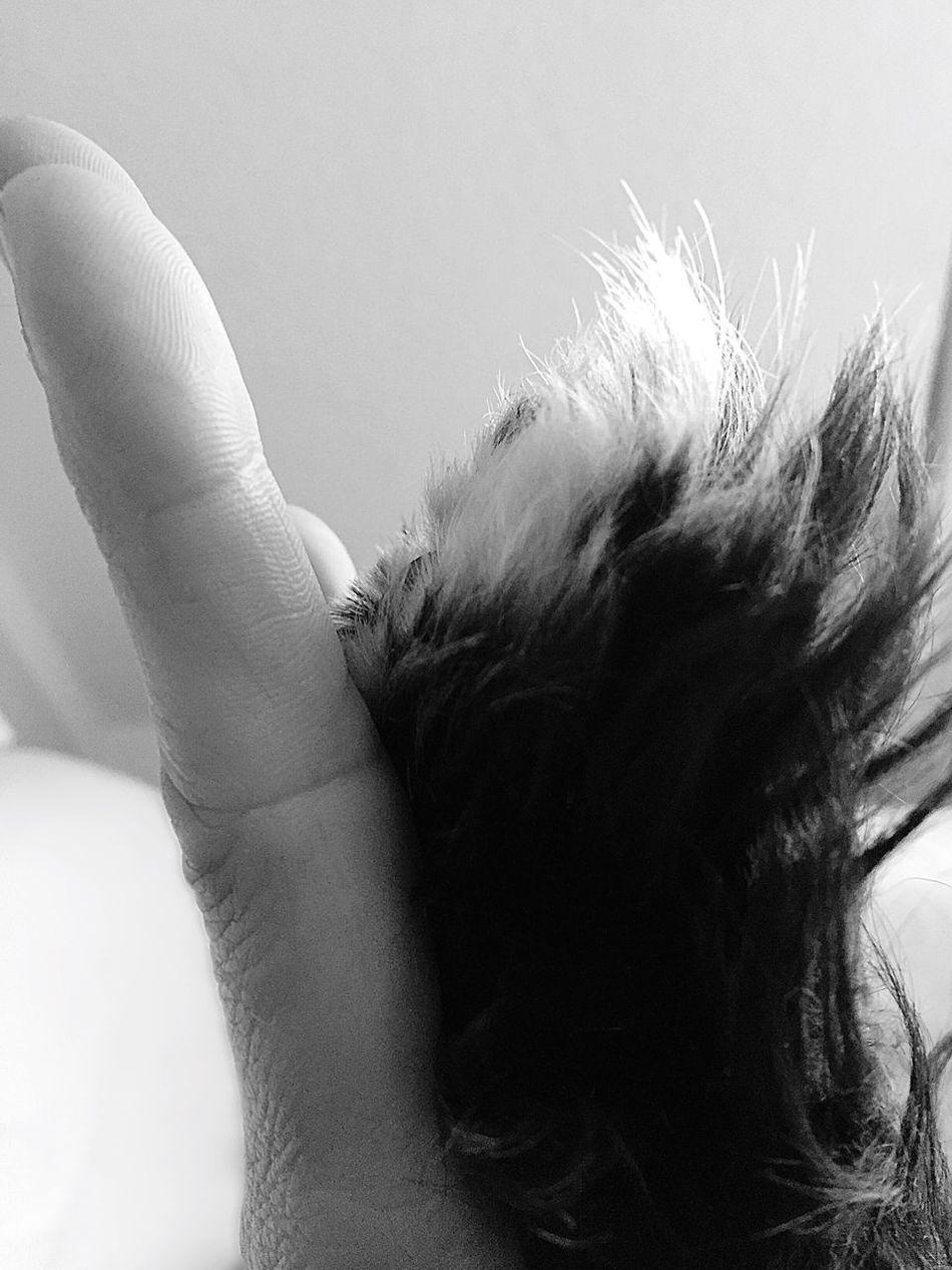 ❤ Bff Bestfriends Bestfriend Friends Black&white Black & White Black And White Photography Blackandwhite Photography Black And White Blackandwhite Hand Handsup  Dog Dog Love Nature Eyemphotography Highfive EyeEmbestshots EyeEm Best Edits IPhone Photography ❤