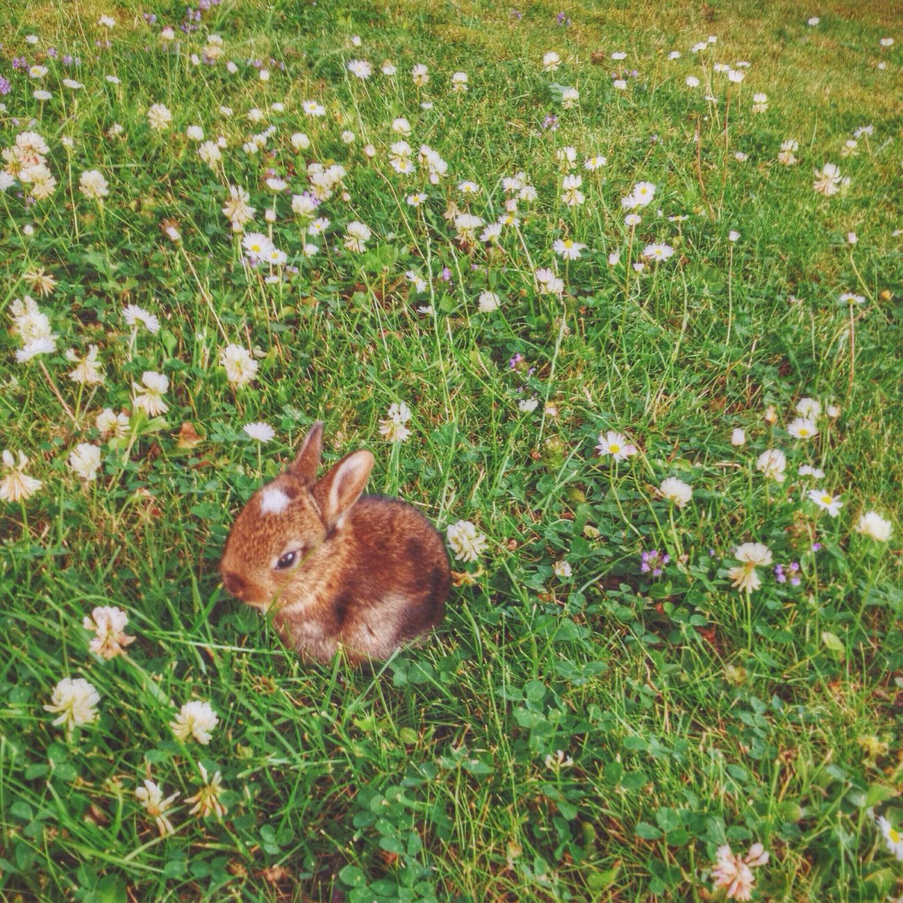 Beautiful stock photos of easter bunny, Animal, Animal Themes, Brown, Close-Up
