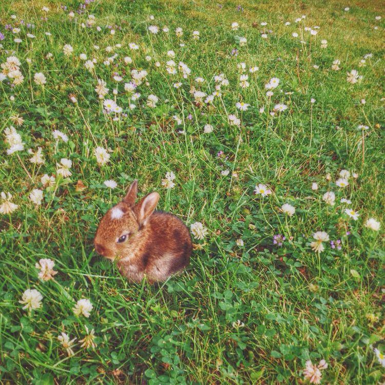 The Durham Series (9/9) Vscocam VSCO Animals United Kingdom