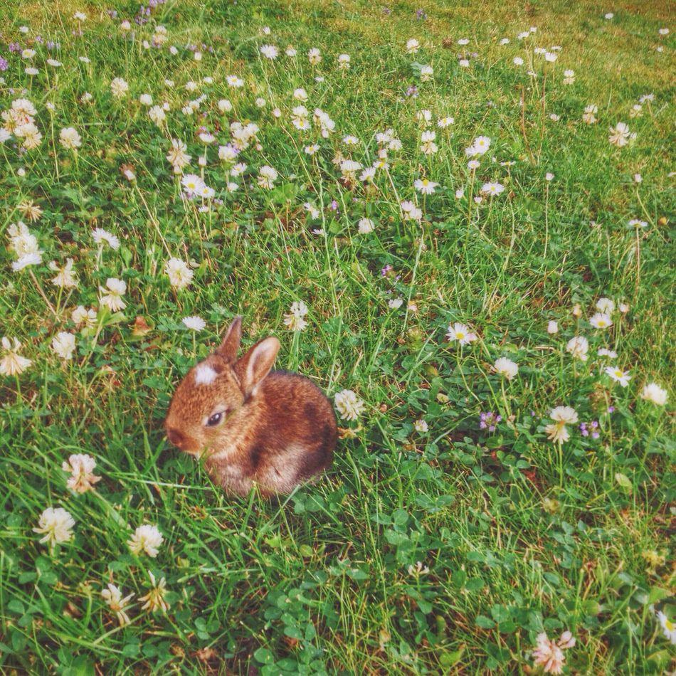 Beautiful stock photos of rabbit, Animal, Animal Themes, Brown, Close-Up