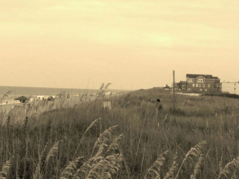 HARSHEEL SHAH Outer Banks, NC Beach Beauty In Nature Grass Kill Devil Hills Nature Scenics Sea