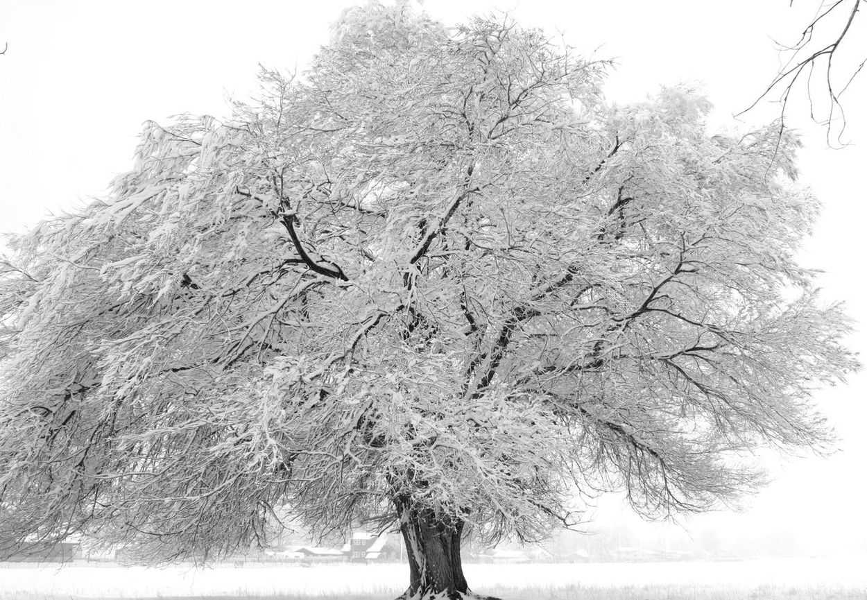 Winter in Wyoming Beauty In Nature Blackandwhite Cold Landscape Nature No People Non-urban Scene Outdoors Scenics Snow Spring Storm Tranquil Scene Tranquility Tree Weather Winter Winter Landscape Winter Wonderland Wyoming Winter First Eyeem Photo