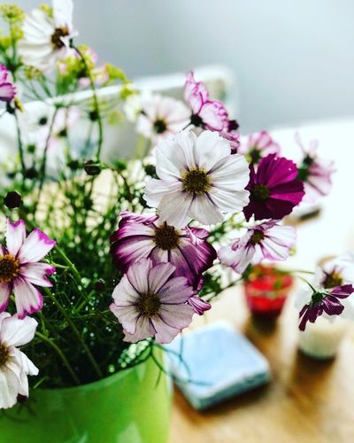 The Week On EyeEm Flower Beauty In Nature Fragility Freshness Close-up Petal Blooming Green Vase Delicate Summer 50 Shades Of Pink