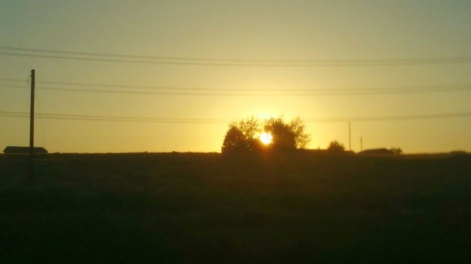Sunset Backlit Dinosaur Romance Nature Imagine