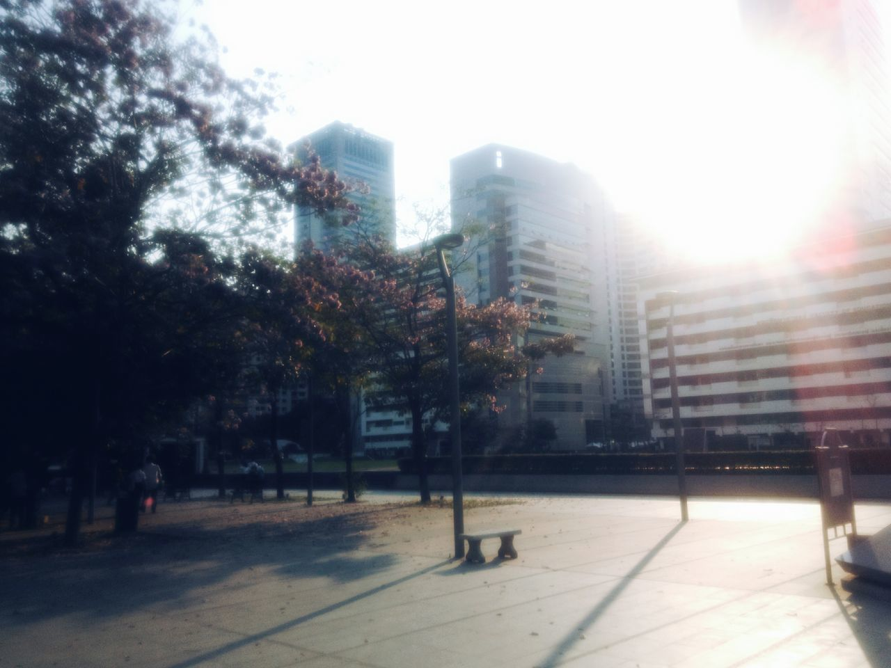 lens flare, building exterior, architecture, city, sunlight, sun, tree, built structure, outdoors, no people, day, skyscraper, sky, clear sky, nature