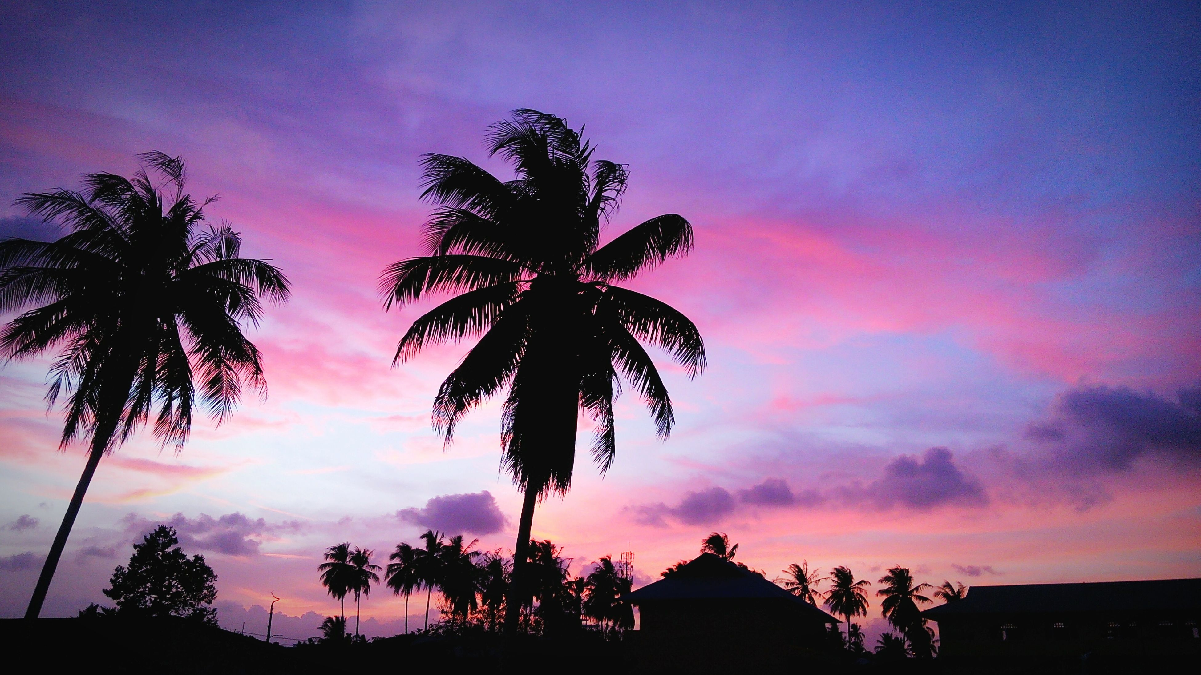 silhouette, sunset, tree, palm tree, sky, low angle view, cloud - sky, beauty in nature, scenics, nature, tranquility, built structure, orange color, dusk, architecture, growth, tranquil scene, dramatic sky, cloud, outdoors