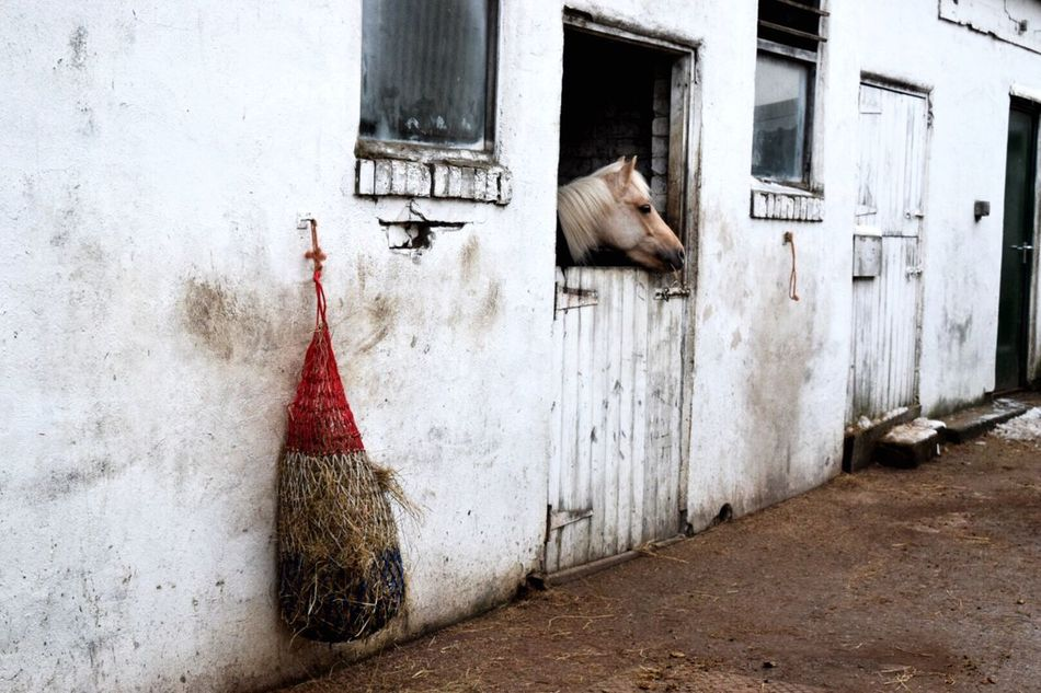 Beautiful stock photos of horse, Animal Themes, Architecture, Building Exterior, Built Structure