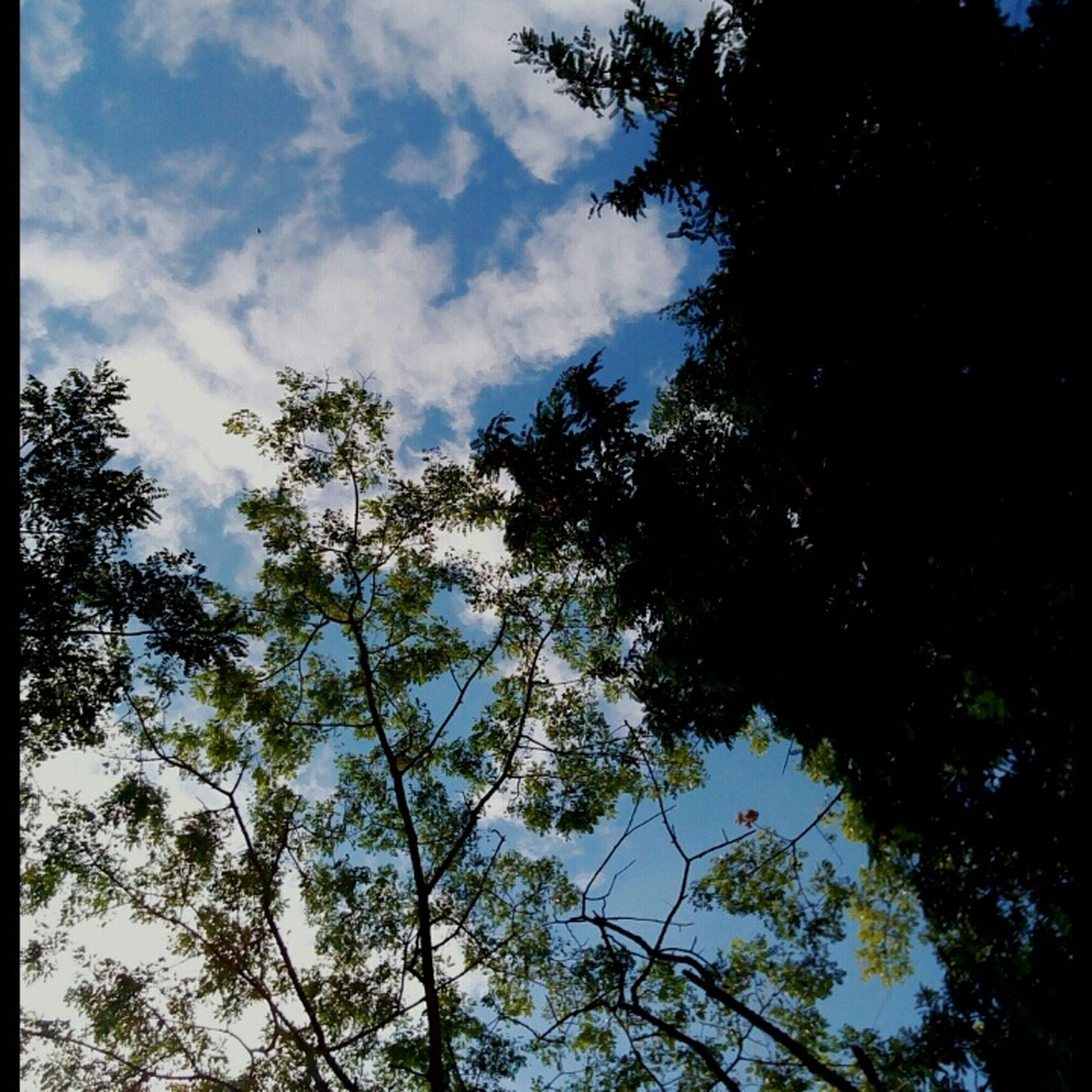 tree, low angle view, sky, branch, growth, tranquility, nature, silhouette, beauty in nature, cloud - sky, scenics, tranquil scene, cloud, outdoors, no people, day, cloudy, high section, tree trunk, treetop