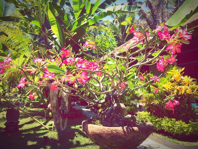 The colours of Bali!🌺🌴🙏🏽😎👌📷☀️ Taking Photos Iphone6 Bali Candidasa Bali Bali, Indonesia Baliphotography Exotic INDONESIA Travel Explore Taking Photos Snapshot Balinese Life Iphone6plus IPhoneography Eat, Pray,Love Green Green Green Green!  Plants
