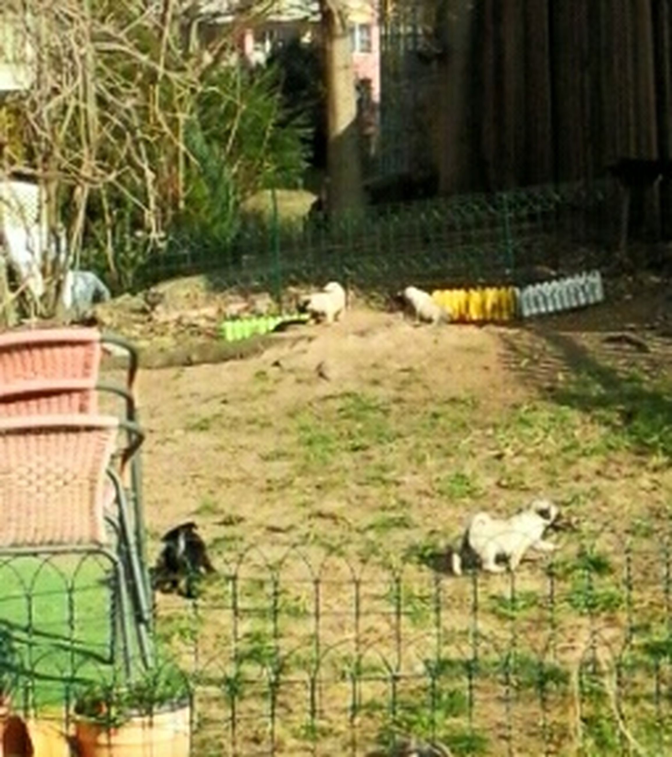 animal themes, one animal, domestic animals, mammal, pets, grass, domestic cat, front or back yard, building exterior, relaxation, cat, built structure, focus on foreground, plant, outdoors, fence, no people, day, architecture, feline
