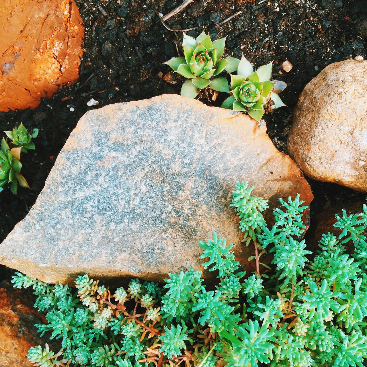 leaf, plant, nature, high angle view, rock - object, growth, outdoors, flower, no people, day, freshness, beauty in nature, close-up, fragility