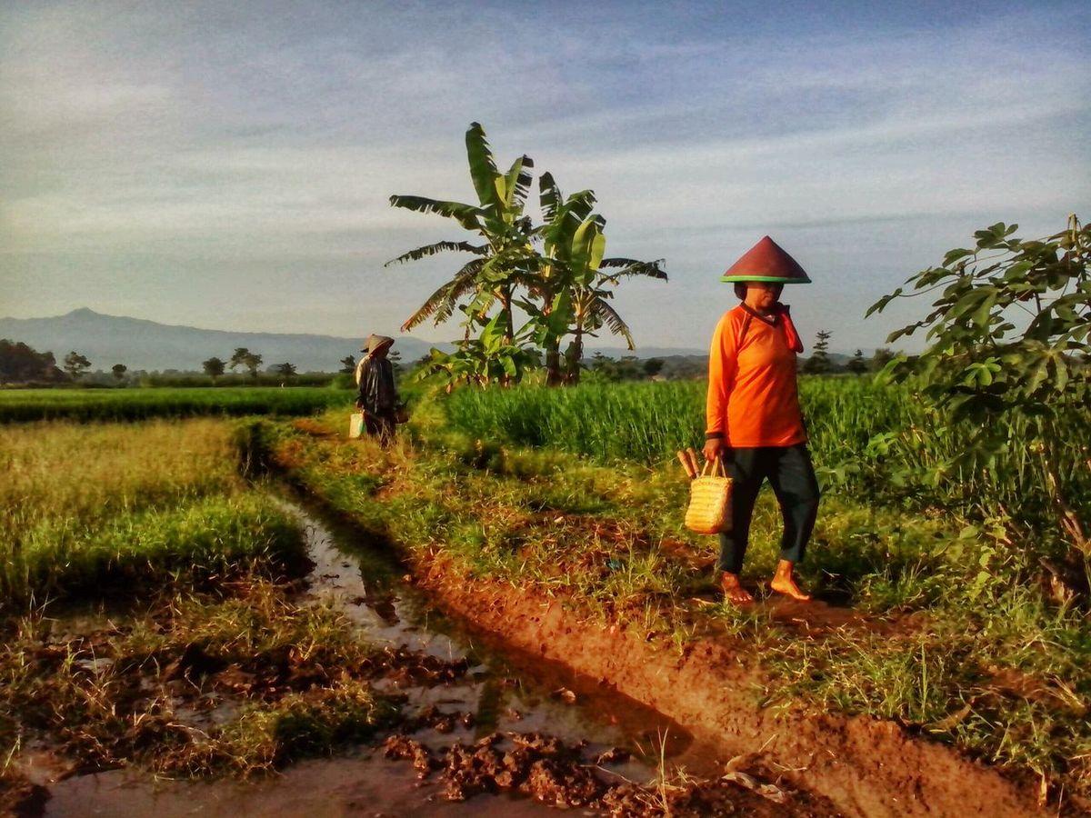 Surobayan Wonopringgo BeautyfullIndonesia Landscape_Collection People Watching People In Frame