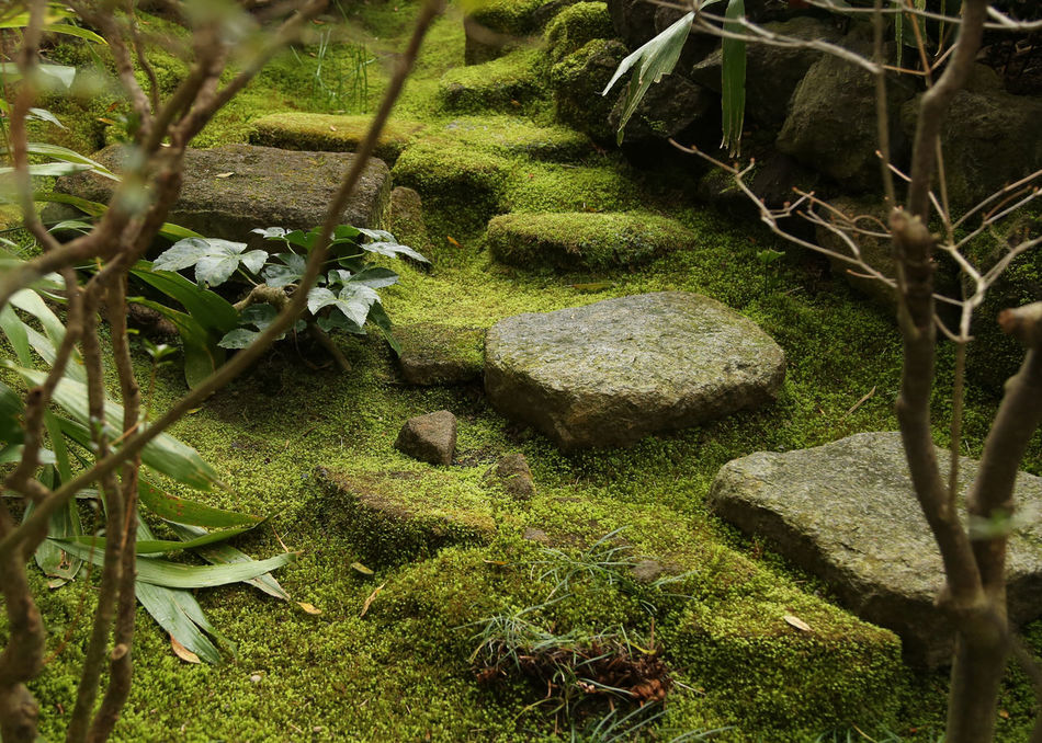 Beautiful stock photos of pflanzen, Day, Footpath, Green Color, Growing