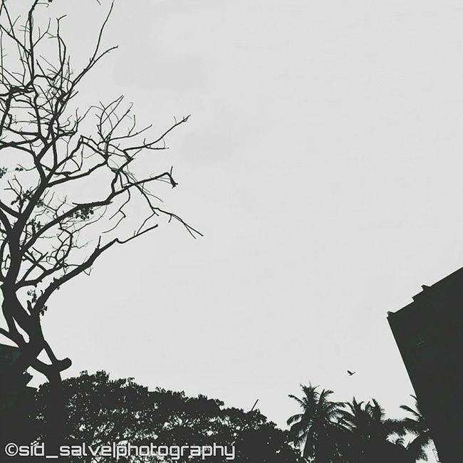 👻SPOOKY👻 Sid_salvephotography Onepluslife @oneplustech Bnw_photo