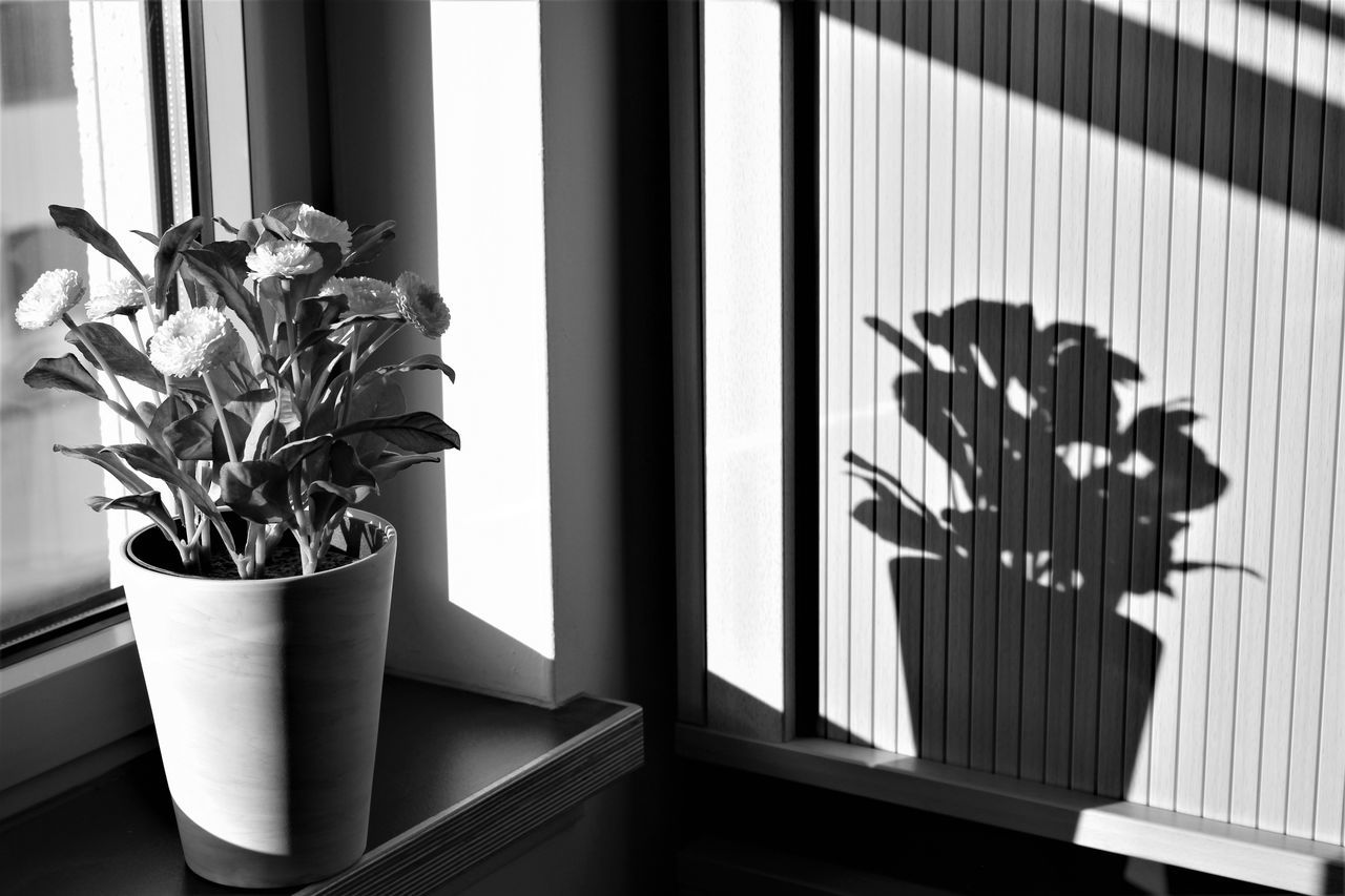 window, growth, plant, potted plant, home interior, flower, indoors, vase, no people, day, nature, close-up, architecture