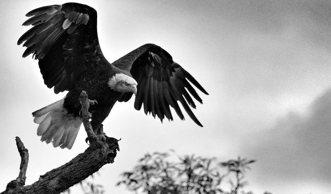 Blackandwhite Clouds And Sky Nature Wildlife