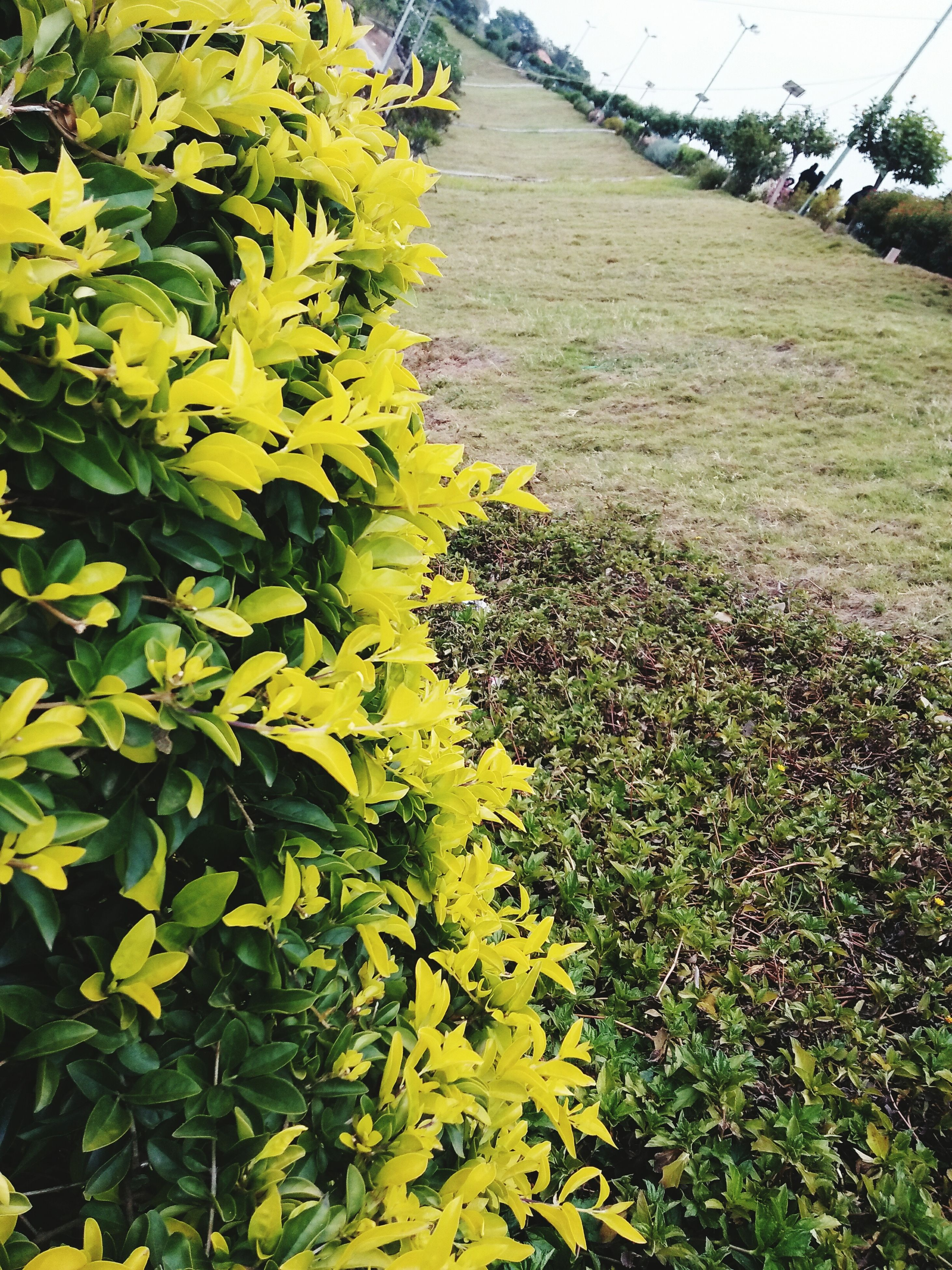 growth, nature, beauty in nature, flower, plant, fragility, green color, day, outdoors, yellow, freshness, flower head, grass, no people, tree, close-up
