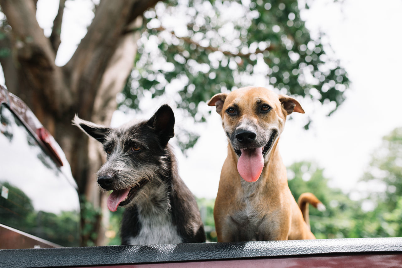 Two Dogs on the back of a truck Animal Themes Back Of A Truck Back Of A Vehicle Dog Dogs On The Back Of A Truck Domestic Animals Happy Happy Dogs Holiday Mammal Outdoor Outdoors Pet On Vehicle Pets Relax Tree Trip Vacation Vehicle