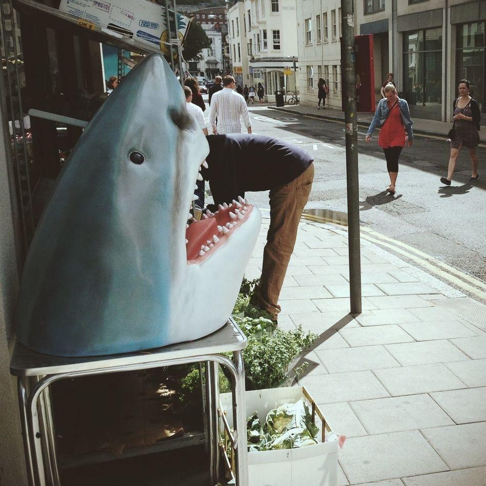 Beautiful stock photos of shark, Animal Mouth, Animal Representation, Architecture, Bending