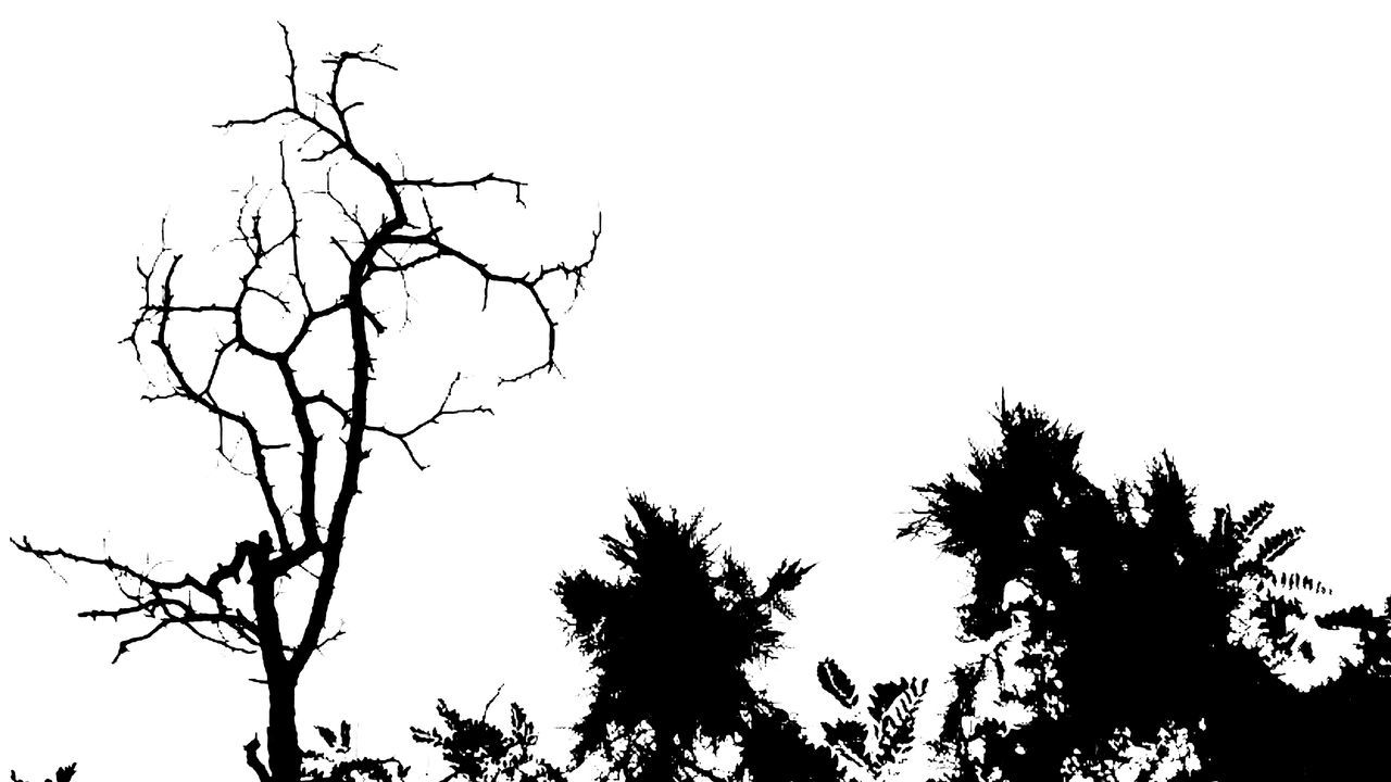 tree, silhouette, branch, nature, low angle view, beauty in nature, bare tree, no people, outdoors, clear sky, tranquility, sky, day, growth, scenics