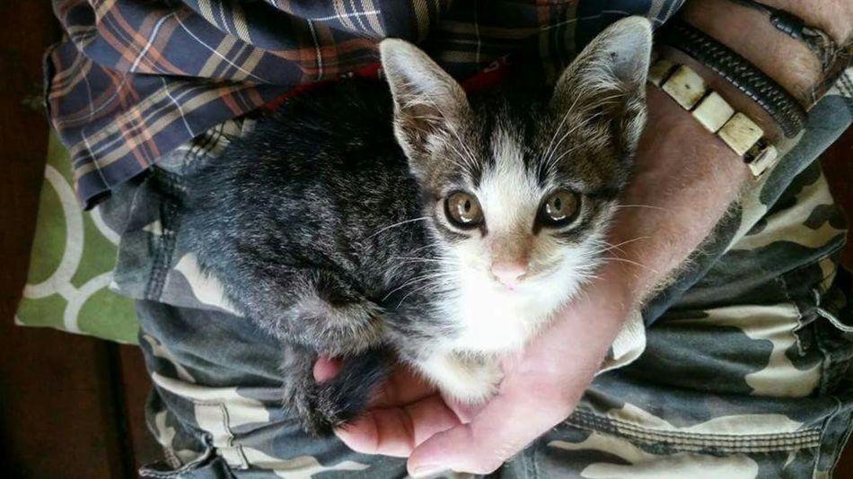 My Best Friend Mao Tiny Cat EyeEm Koh Phangan Lieblingsteil The Secret Spaces