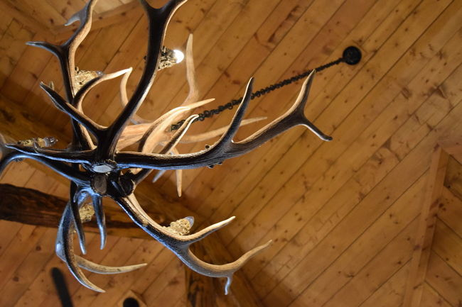 Antlers Chandelier Decor Fixture Illuminated Indoors  Lighting Modern No People Rustic Wall - Building Feature Wood - Material