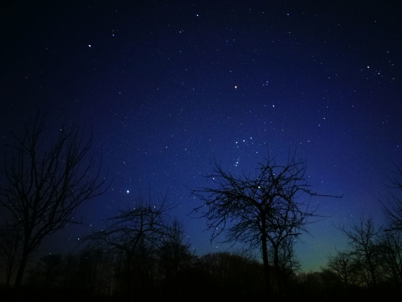 Star - Space Tree Astronomy Sky Night Space And Astronomy Space Beauty In Nature Nature Star Field Galaxy Constellation Dark Scenics Silhouette No People Outdoors Tranquil Scene Low Angle View HuaweiP9 EyeEm