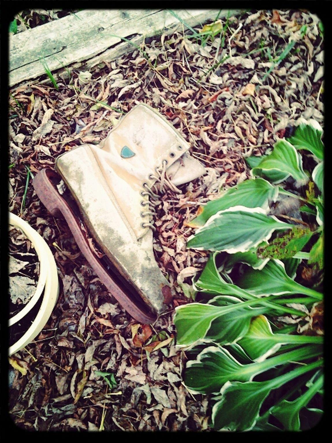 Fallgarden In My Garden Goodbye Summer