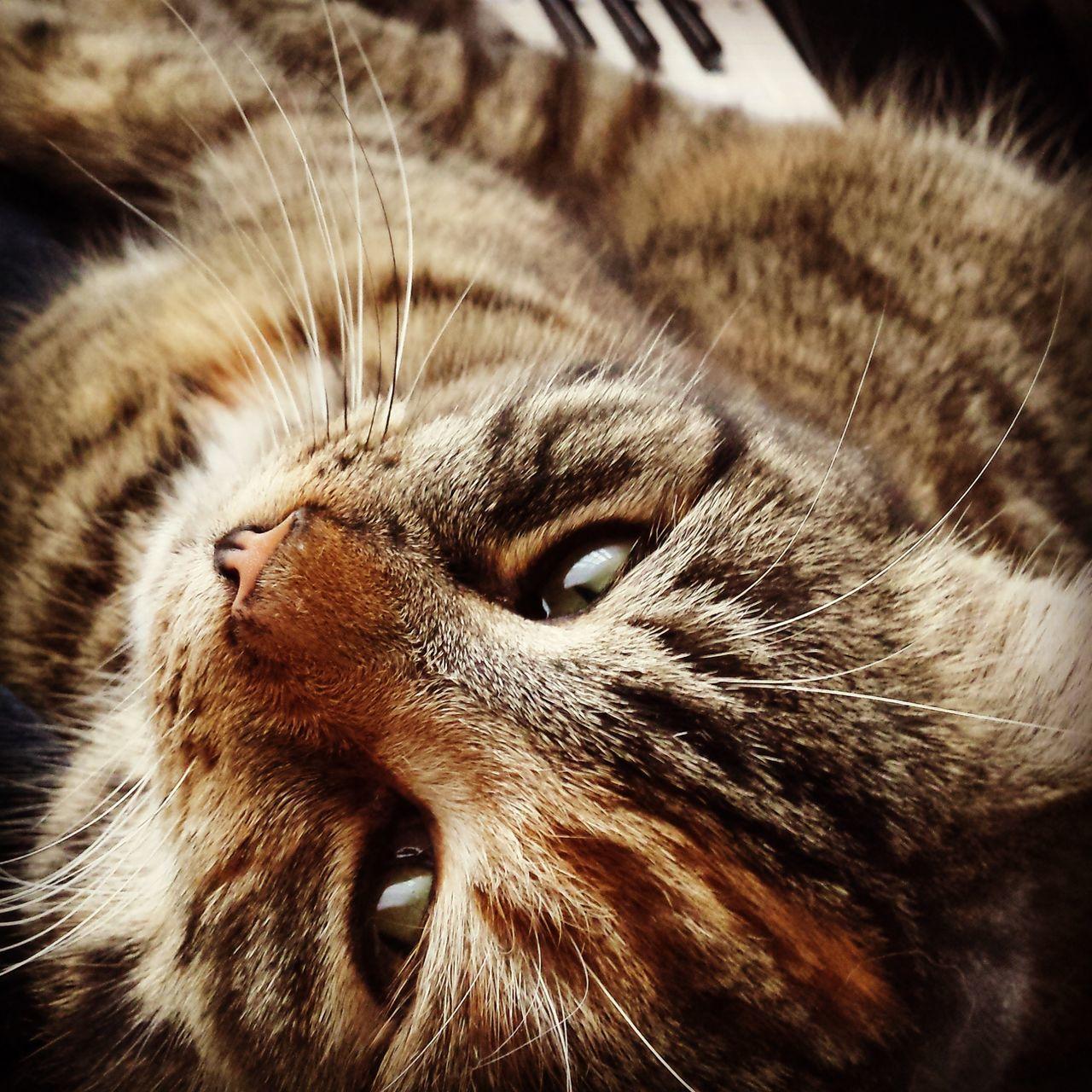 One Animal Animal Themes Close-up Domestic Cat Pets Outdoors No People Domestic Animals Feline Day Cat Catlovers Catlady Grumpy Cat Animallovers Animal Cats Catsoftheworld Catsagram Catoftheday