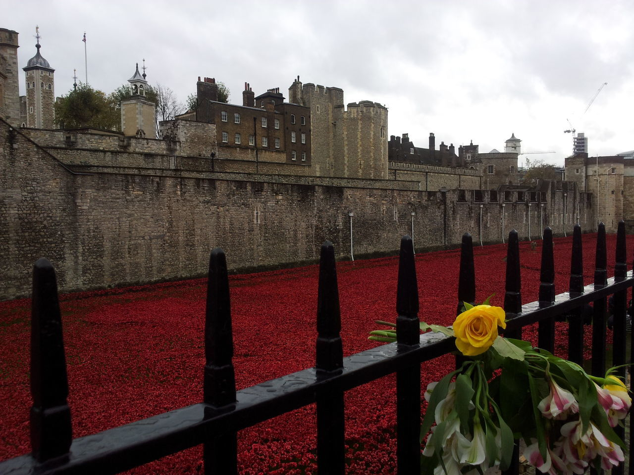 100th Anniversary Architecture Blood Building Exterior Built Structure Day Flower Fortress Historic Castle History Nature No People Outdoors Poppy Poppy Flowers Remembrance Remembrance Poppy Royal Palace The Blood Swept Lands And Seas Of Red Tower Of London World War I