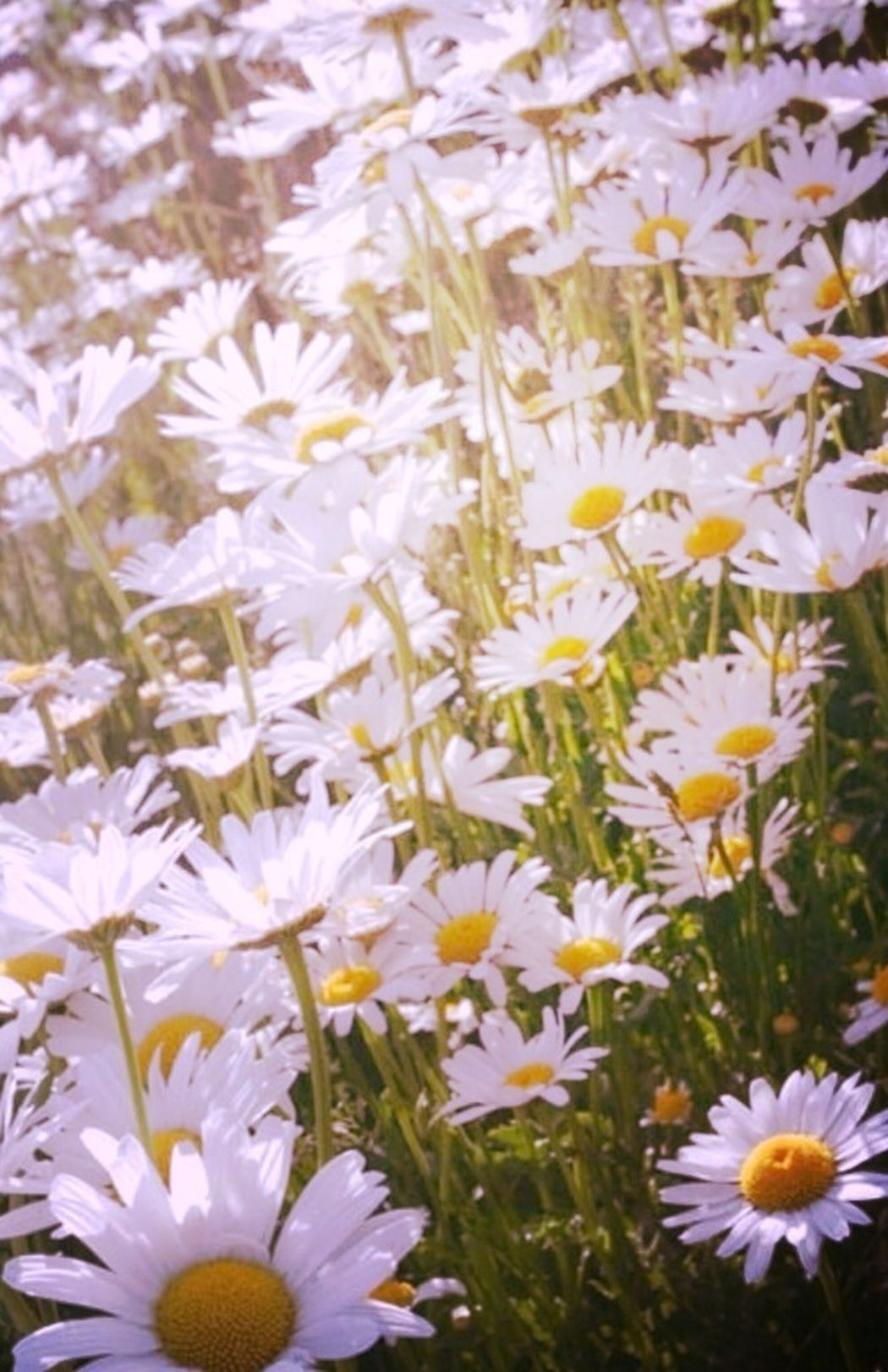 Dont Pick The Daisies