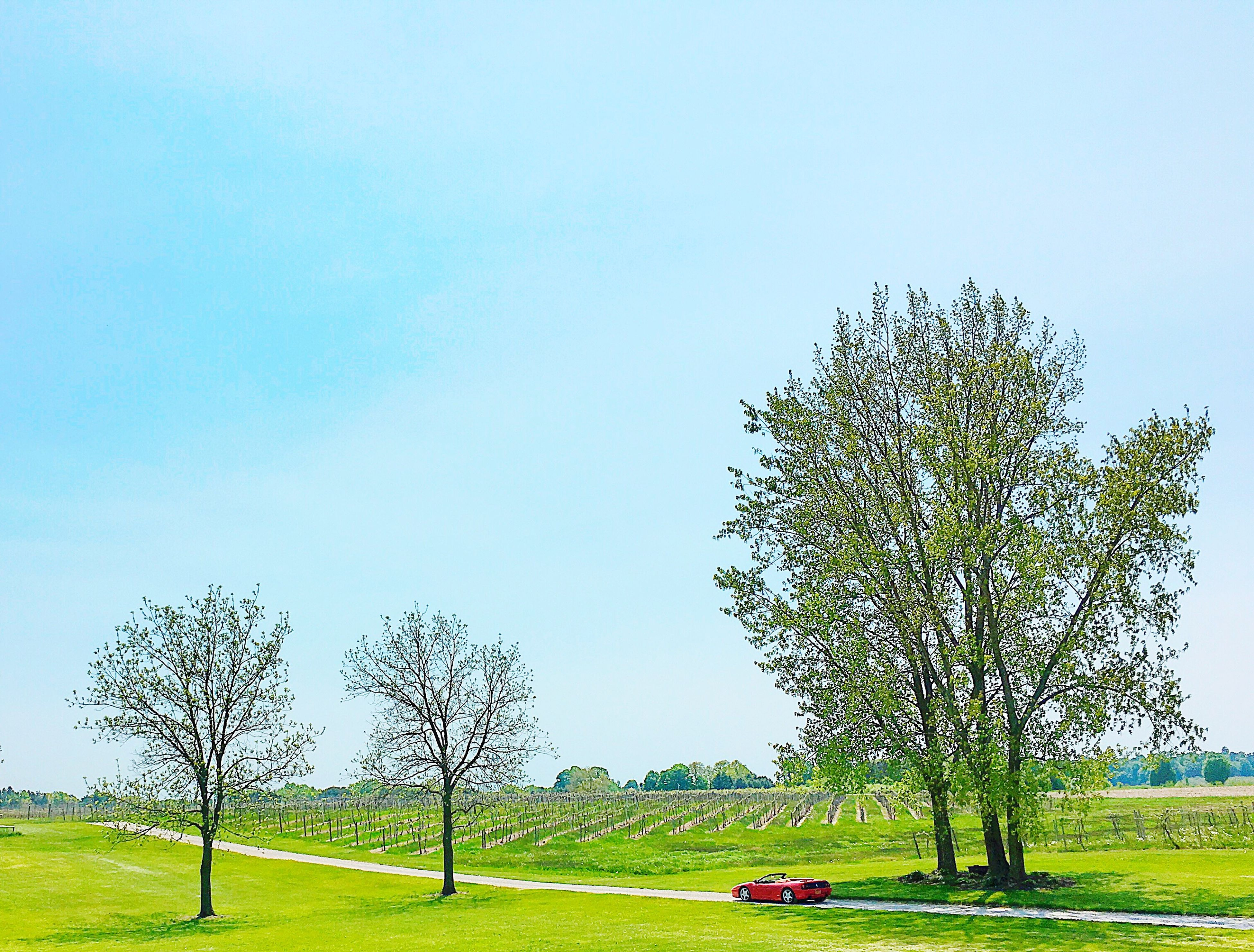 grass, clear sky, tree, field, copy space, landscape, grassy, green color, tranquility, growth, nature, tranquil scene, beauty in nature, blue, scenics, branch, sky, day, park - man made space, meadow