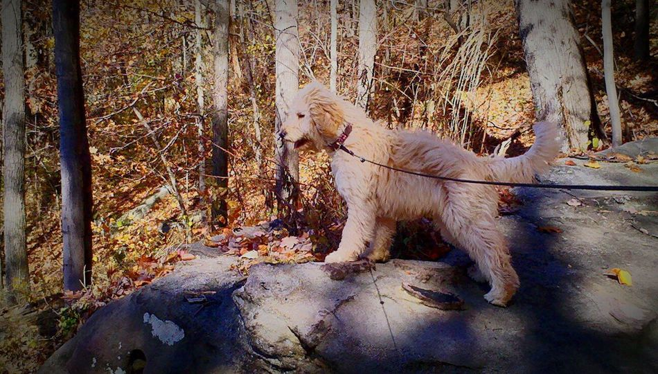 Guard Duty Golden Doodle Mountain Top Lookout The Great Outdoors - 2016 EyeEm Awards
