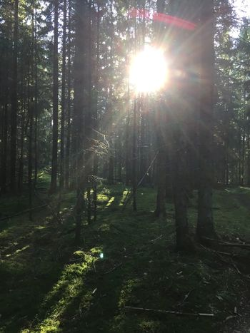 The sun reaches you even in the deepest forest Woods Forest Forestpath Peaceful No Filter Noedit No People Sun