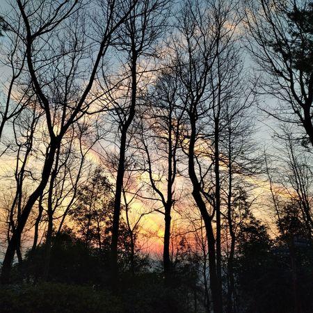 岳麓山 Trees Outdoors Photograpghy  Sunset