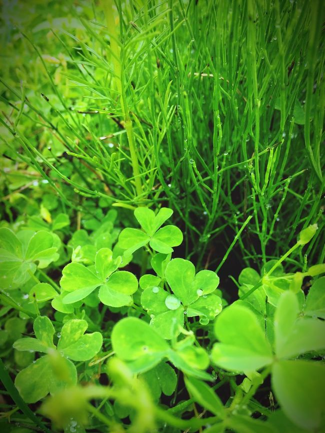 Hello World Green EyeEm Nature Lover Nature_collection Iphoneonly