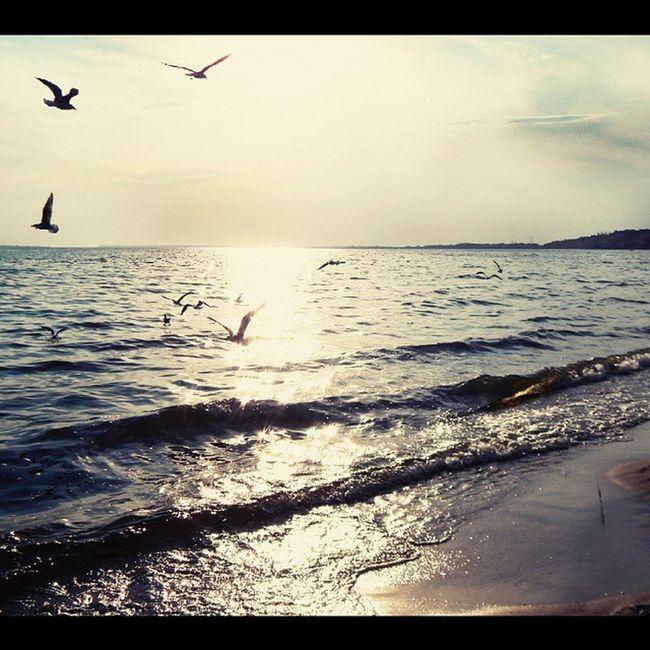 летовернись я скучаю( лето Море Чайки Николаев очаков осень девочкитакиедевочки Nikolaevgram Nikolaev