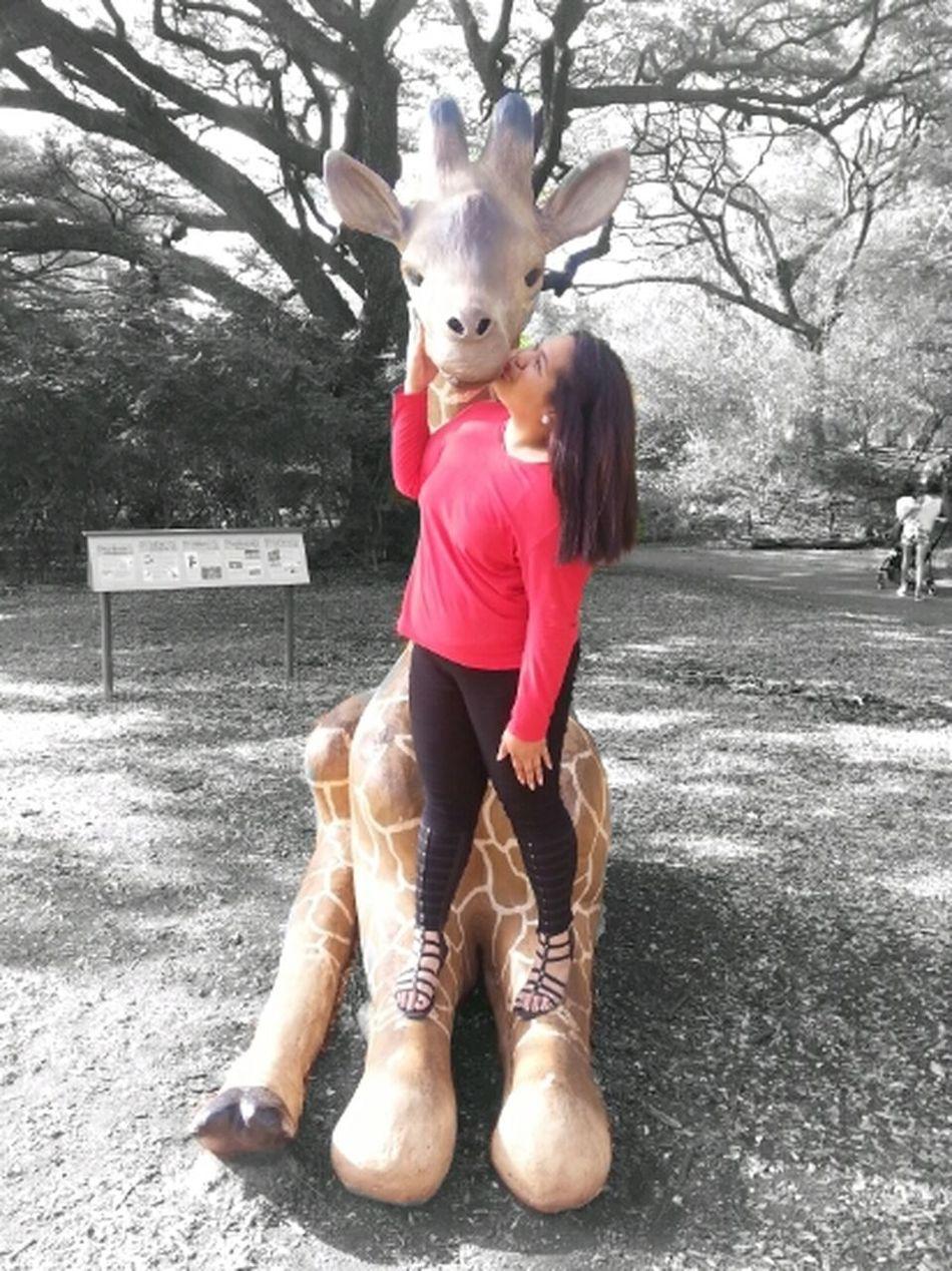 Giraffe KAWAII Red Honolulu, Hawaii