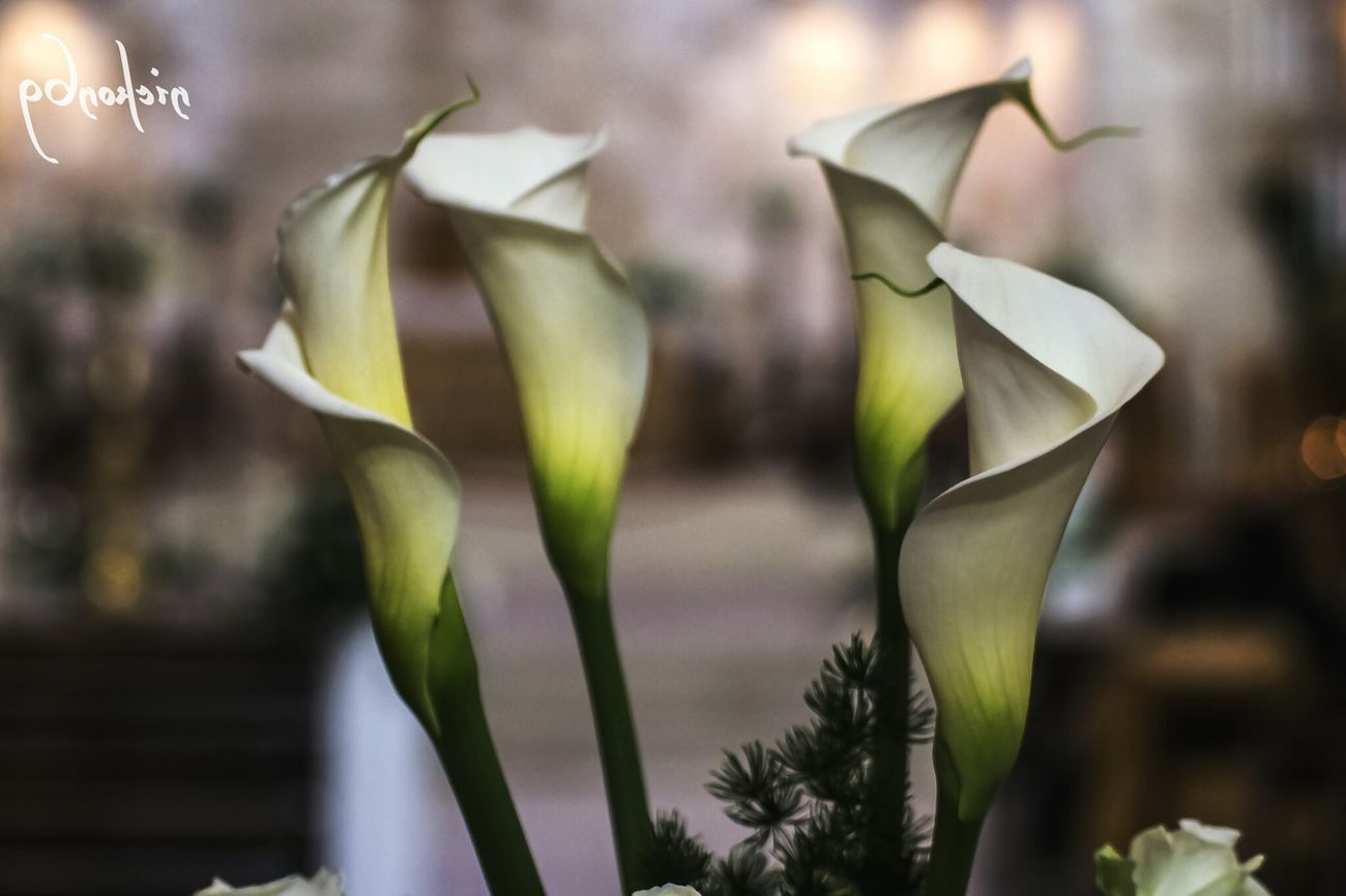 good morning Picsart_family pics Flowers Photography Streamzoofamily